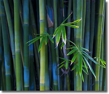 Bamboo is fully sustainable